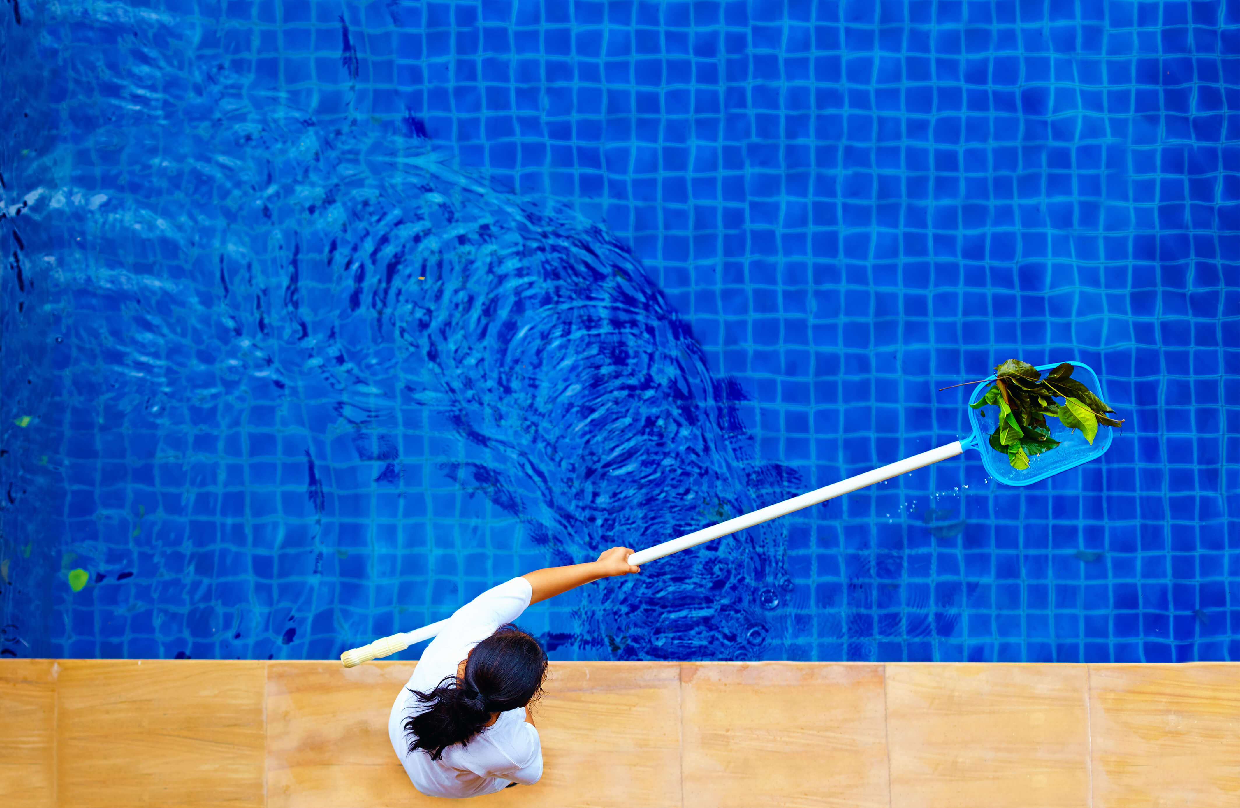 woman, personnel cleaning the pool from leaves